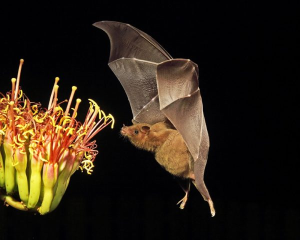 Common Myths About Wild Bats